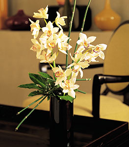 İsparta çiçekçiler  cam yada mika vazo içerisinde dal orkide