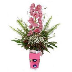 İsparta hediye çiçek yolla  cam yada mika vazo içerisinde tek dal orkide çiçegi