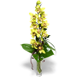 İsparta İnternetten çiçek siparişi  cam vazo içerisinde tek dal canli orkide