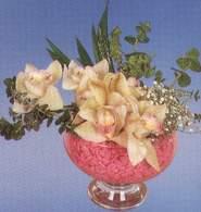 İsparta çiçek mağazası , çiçekçi adresleri  Dal orkide kalite bir hediye