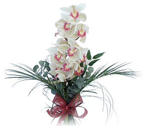 İsparta çiçek siparişi sitesi  Dal orkide ithal iyi kalite