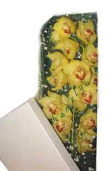 İsparta çiçek gönderme  Kutu içerisine dal cymbidium orkide