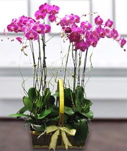 4 dallı mor orkide  İsparta güvenli kaliteli hızlı çiçek