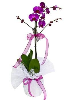 Tek dallı mor orkide  İsparta çiçekçi telefonları