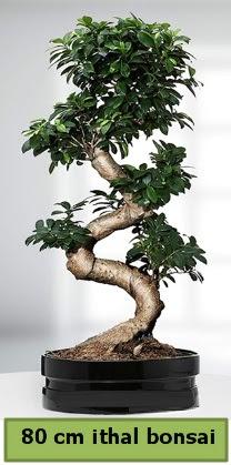 80 cm özel saksıda bonsai bitkisi  İsparta çiçekçi telefonları