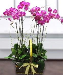 7 dallı mor lila orkide  İsparta çiçek gönderme sitemiz güvenlidir