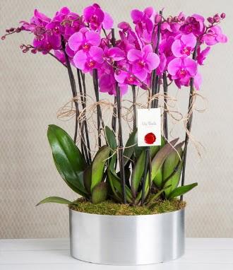 11 dallı mor orkide metal vazoda  İsparta çiçek gönderme sitemiz güvenlidir