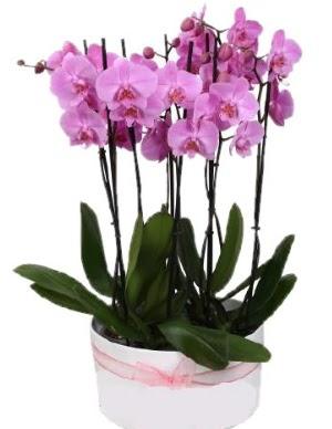 Beyaz seramik içerisinde 7 dallı mor orkide  İsparta çiçekçi telefonları