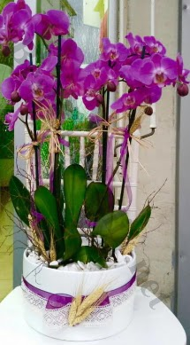 Seramik vazoda 4 dallı mor lila orkide  İsparta online çiçek gönderme sipariş