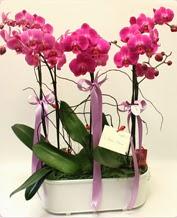 Beyaz seramik içerisinde 4 dallı orkide  İsparta ucuz çiçek gönder
