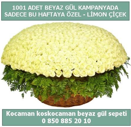 1001 adet beyaz gül sepeti özel kampanyada  İsparta çiçek gönderme sitemiz güvenlidir