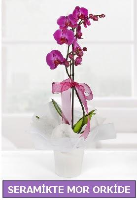 Seramik içerisinde birinci kalite tek dallı mor orkide  İsparta İnternetten çiçek siparişi