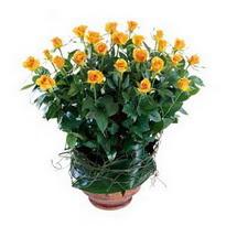 İsparta cicekciler , cicek siparisi  10 adet sari gül tanzim cam yada mika vazoda çiçek
