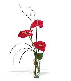 İsparta çiçek siparişi sitesi  cam yada mika Vazoda 3 adet  antoryum
