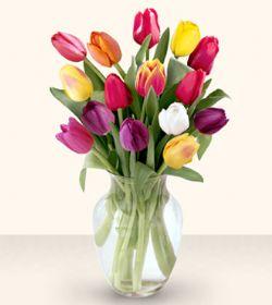 İsparta çiçekçiler  13 adet cam yada mika vazoda laleler