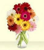 İsparta çiçek yolla , çiçek gönder , çiçekçi   cam yada mika vazoda 15 özel gerbera