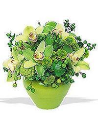 cam yada mika vazoda 5 adet orkide   İsparta online çiçekçi , çiçek siparişi