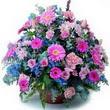 karisik mevsim kir çiçekleri  İsparta çiçek gönderme sitemiz güvenlidir
