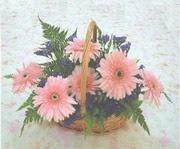 gerbera çiçeklerinde sepet   İsparta çiçek yolla