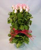 13 adet pembe gül silindirde   İsparta çiçek yolla