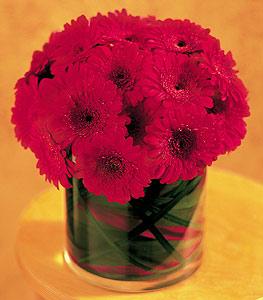 İsparta ucuz çiçek gönder  23 adet gerbera çiçegi sade ve sik cam içerisinde