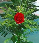 1 adet kirmizi gül buketi   İsparta çiçek siparişi vermek