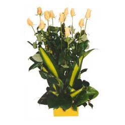 12 adet beyaz gül aranjmani  İsparta kaliteli taze ve ucuz çiçekler