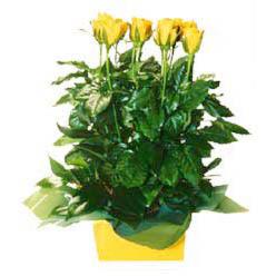 11 adet sari gül aranjmani  İsparta online çiçekçi , çiçek siparişi