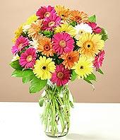 İsparta çiçek online çiçek siparişi  17 adet karisik gerbera