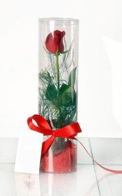 İsparta çiçek yolla  Silindir vazoda tek kirmizi gül