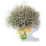 İsparta çiçek mağazası , çiçekçi adresleri  cam yada mika vazo içerisinde cipsofilya demeti