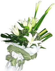 İsparta güvenli kaliteli hızlı çiçek  3 dal kazablanka çiçegi ve yesillikler
