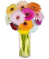 İsparta internetten çiçek siparişi  Farkli renklerde 15 adet gerbera çiçegi