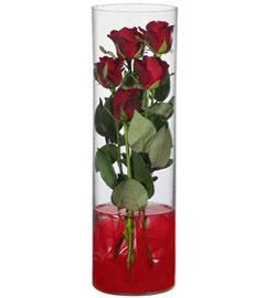 cam içerisinde 7 adet kirmizi gül  İsparta çiçekçiler