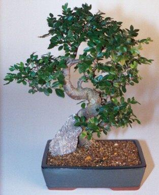İsparta çiçek gönderme sitemiz güvenlidir  ithal bonsai saksi çiçegi  İsparta çiçek siparişi sitesi