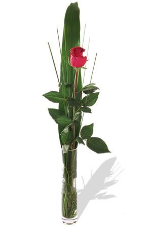 1 adet cam vazo içerisinde kirmizi gül  İsparta çiçek , çiçekçi , çiçekçilik