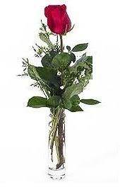 Vazo içerisinde 1 adet kirmizi gül  İsparta cicekciler , cicek siparisi