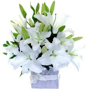 İsparta çiçek yolla  2 dal cazablanca vazo çiçeği