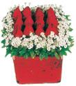 İsparta çiçek gönderme  Kare cam yada mika içinde kirmizi güller - anneler günü seçimi özel çiçek