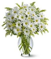 Vazo içerisinde beyaz krizantem çiçekleri  İsparta çiçekçi mağazası