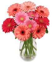 vazo içerisinde 13 adet gerbera çiçeği  İsparta çiçek siparişi sitesi