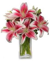 Vazo içerisinde 5 dal kazablanka çiçeği  İsparta cicekciler , cicek siparisi