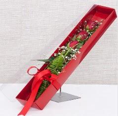 Kutu içerisinde 3 adet kırmızı gül  İsparta online çiçek gönderme sipariş