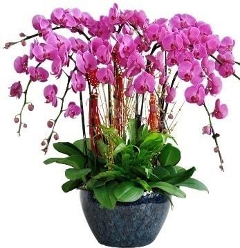 9 dallı mor orkide  İsparta 14 şubat sevgililer günü çiçek