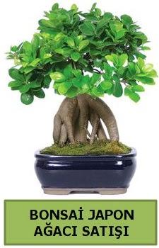 Bonsai japon ağacı satışı  İsparta çiçek satışı