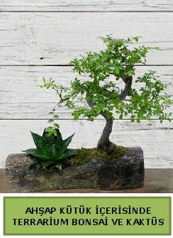 Ahşap kütük bonsai kaktüs teraryum  İsparta internetten çiçek siparişi