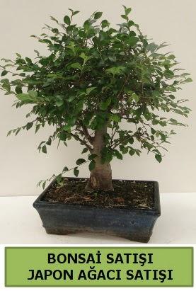 Minyatür bonsai japon ağacı satışı  İsparta çiçek gönderme sitemiz güvenlidir