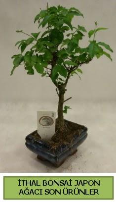 İthal bonsai japon ağacı bitkisi  İsparta hediye sevgilime hediye çiçek