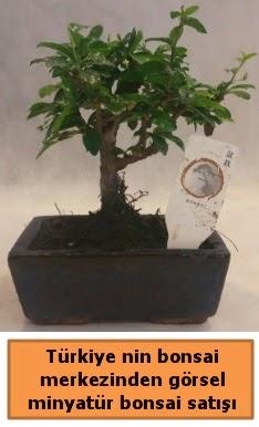 Japon ağacı bonsai satışı ithal görsel  İsparta çiçek yolla