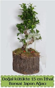 Doğal kütükte İthal bonsai japon ağacı  İsparta çiçek gönderme